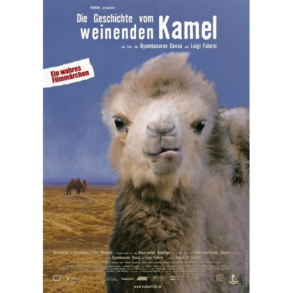 Camelos Também Choram - 2003